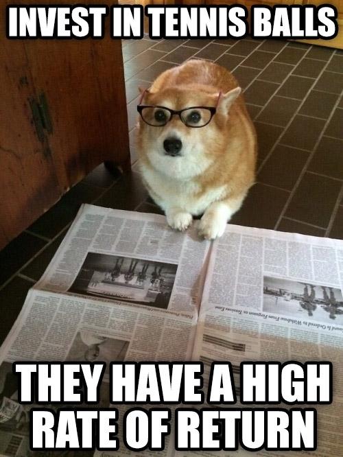 business-dog-173982