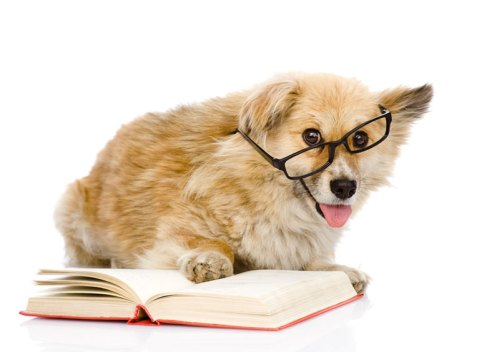 dog-reading-love-books-study-cute-images-animal-pics-mojly-com-8
