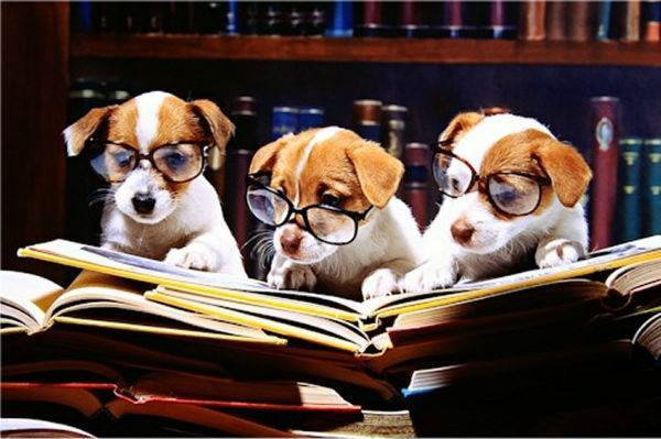 puppies reading